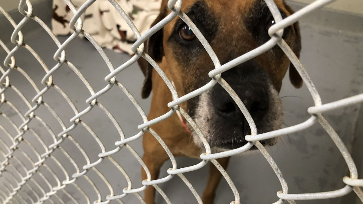 Emergency need for adoptions at Columbus County Animal Shelter