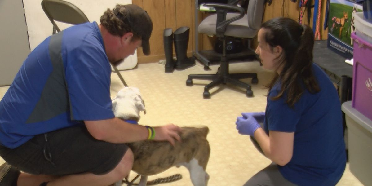 Humane Society of Charlotte taking in dogs as Hurricane Dorian slowly approaches US