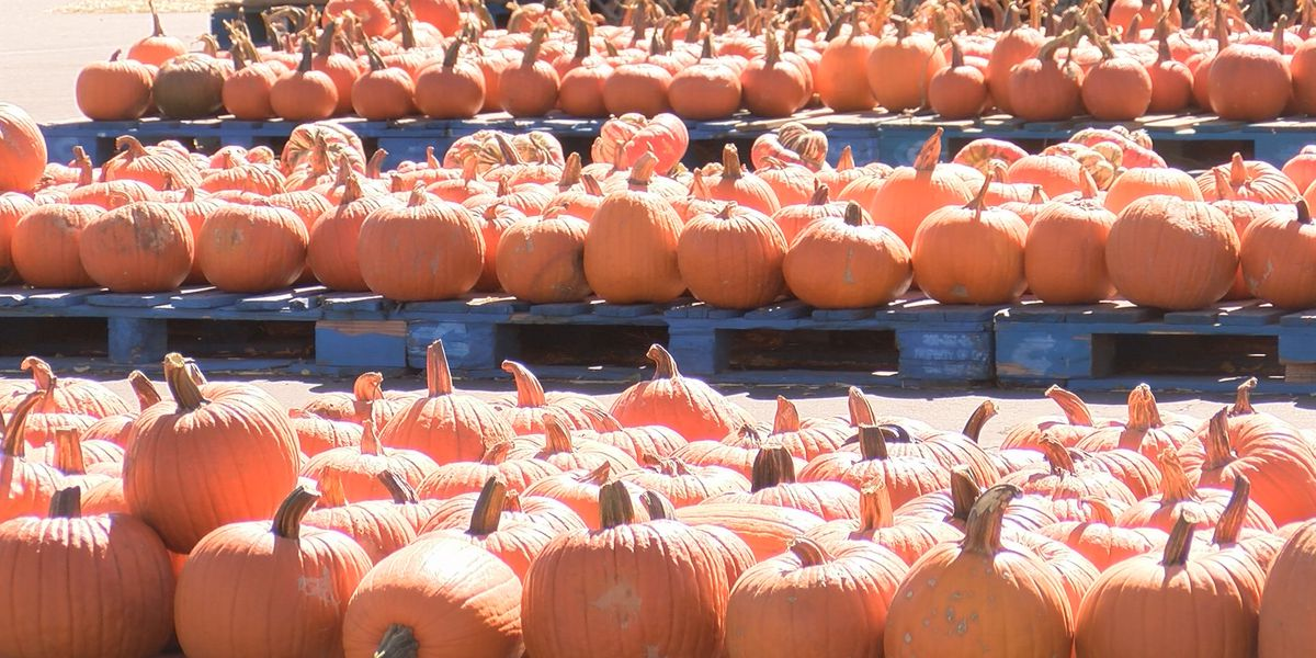 Leftover pumpkin collection taking place at Arboretum