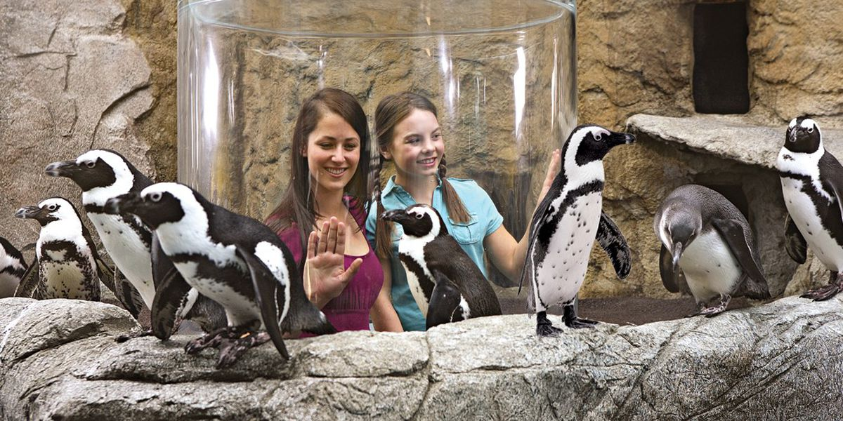 'Penguin Playhouse' to open at Myrtle Beach Ripley's Aquarium in early 2020