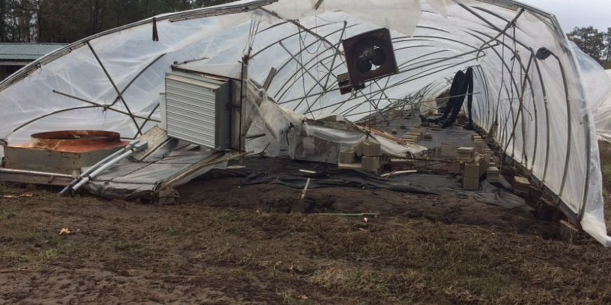 Help for farmers after Hurricane Florence