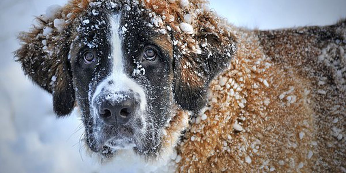 Keeping pets protected in cold weather