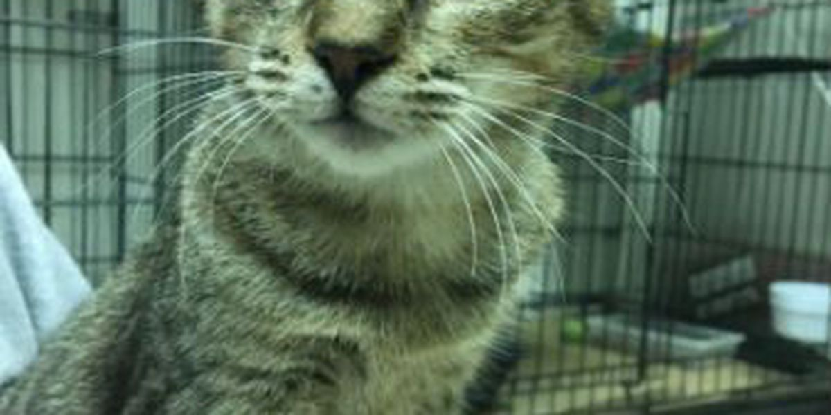 Columbus County animals find homes near and far