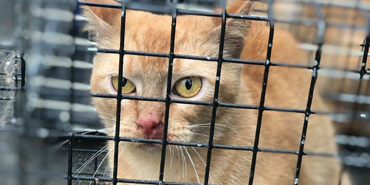 Animal cruelty: Cats found in deplorable condition, one dead