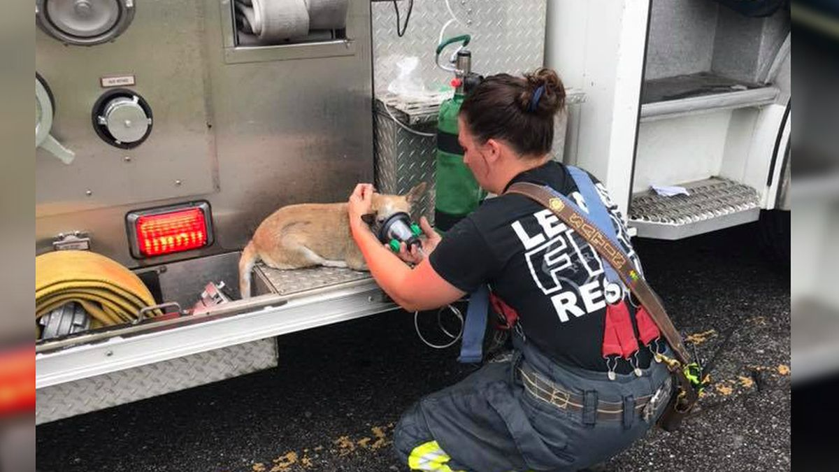 Leland firefighters save family pet during mobile home fire
