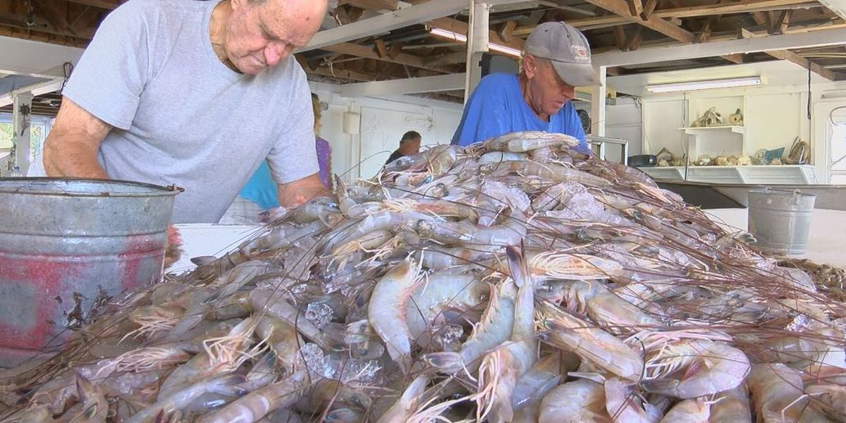 Shrimpers hoping to salvage harvest season plagued by Hurricane Florence