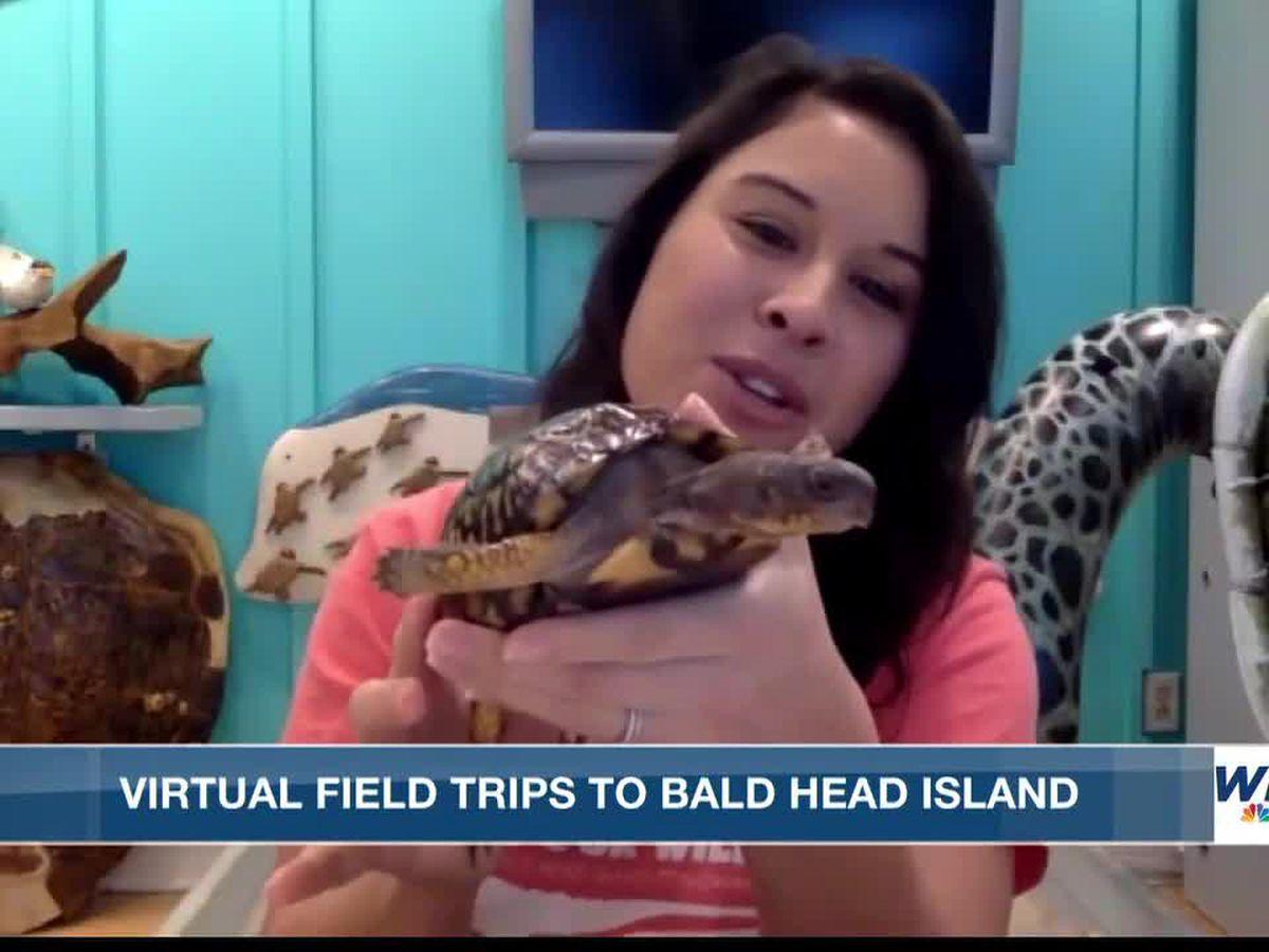 Visit Bald Head Island on a virtual field trip
