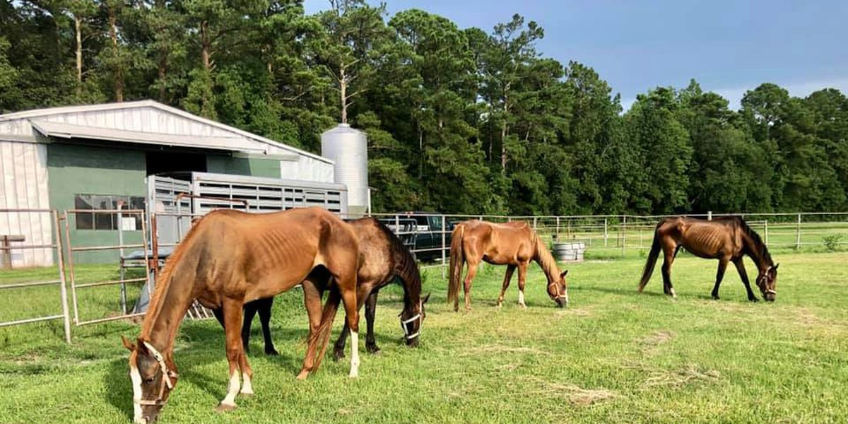 Trio face charges after emaciated horses found at New Hanover farm