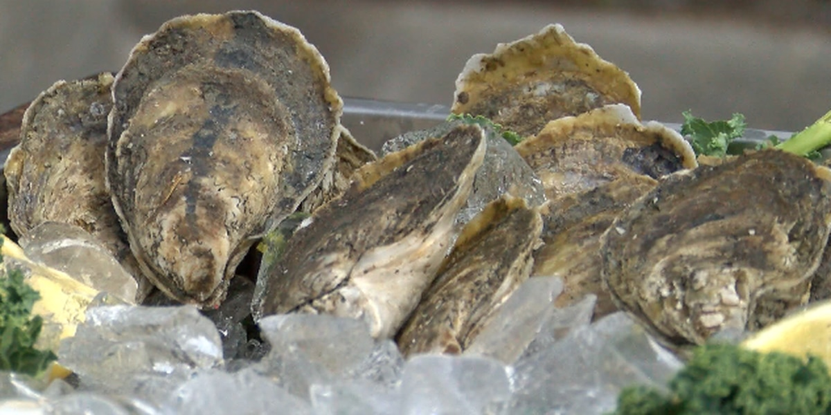 Oyster farmers feeling the financial strain of the coronavirus pandemic