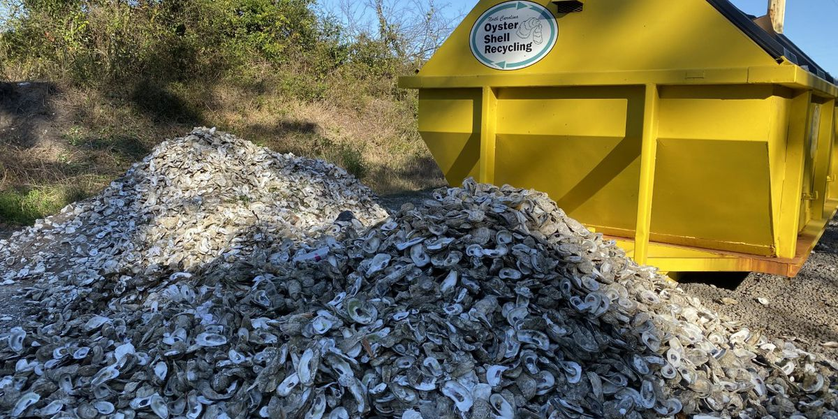 New oyster recycling program hopes to help declining population